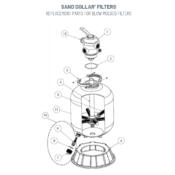 407 - Sand Dollar